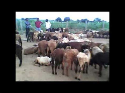 Goat farming business plan in hyderabad - NUCLEARRAT CF